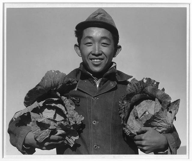 Cabbage Farmer