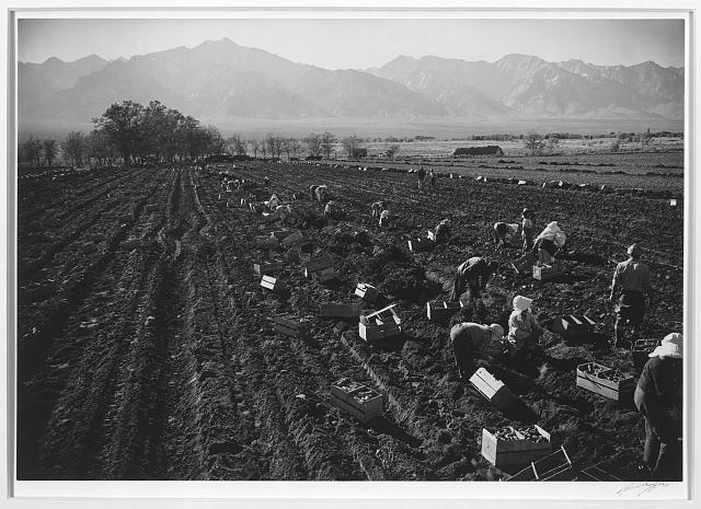 Potato Farm and Wage Workers
